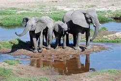 Tanzania 1000Px