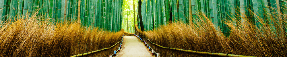 A forest path in Japan